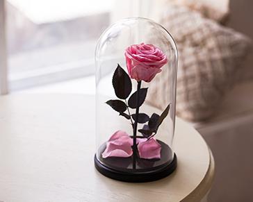 Роза в колбе волгоград