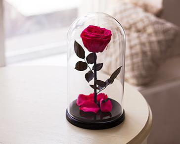 Сколько в самаре стоит роза в